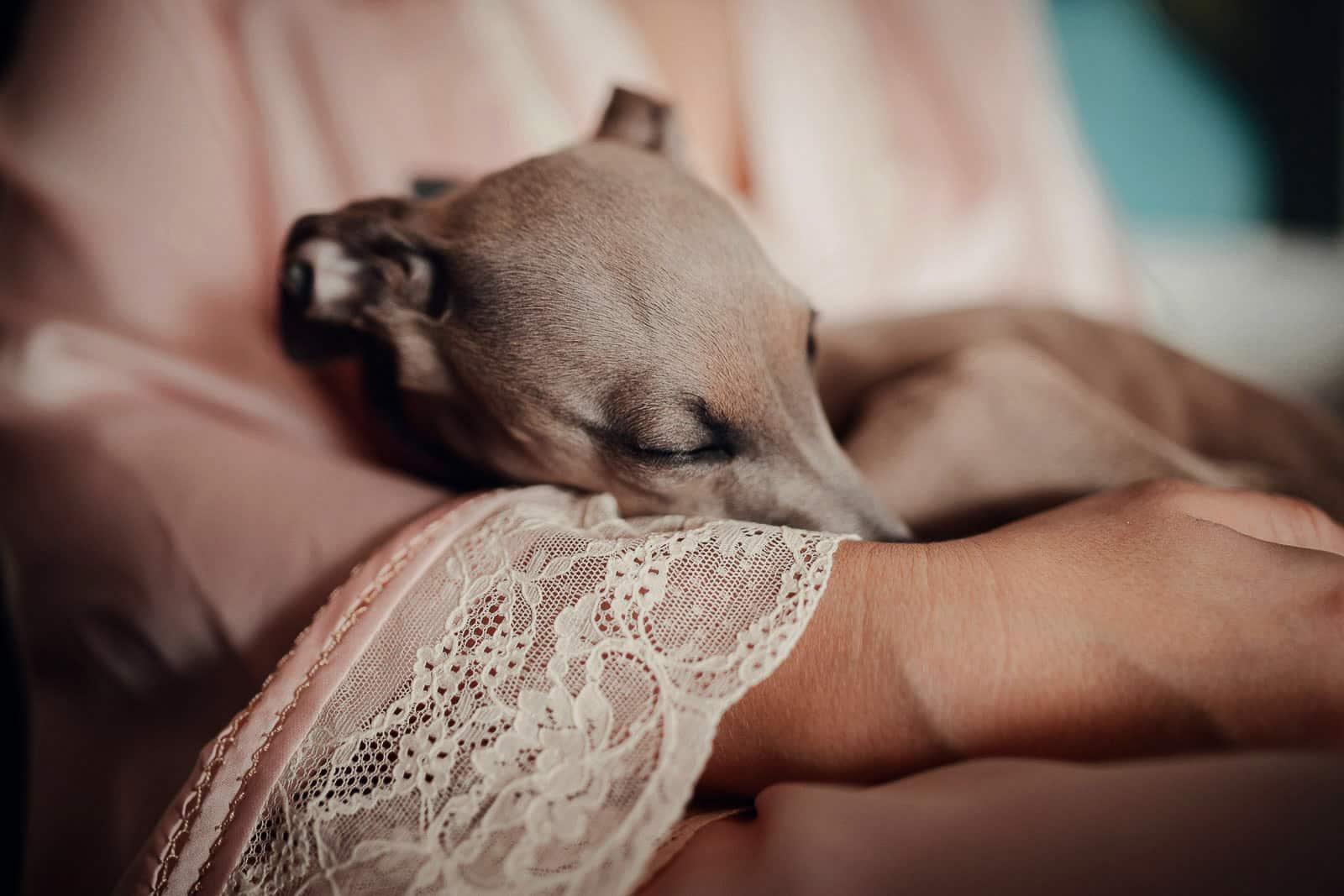 perro durmiendo detalle encaje