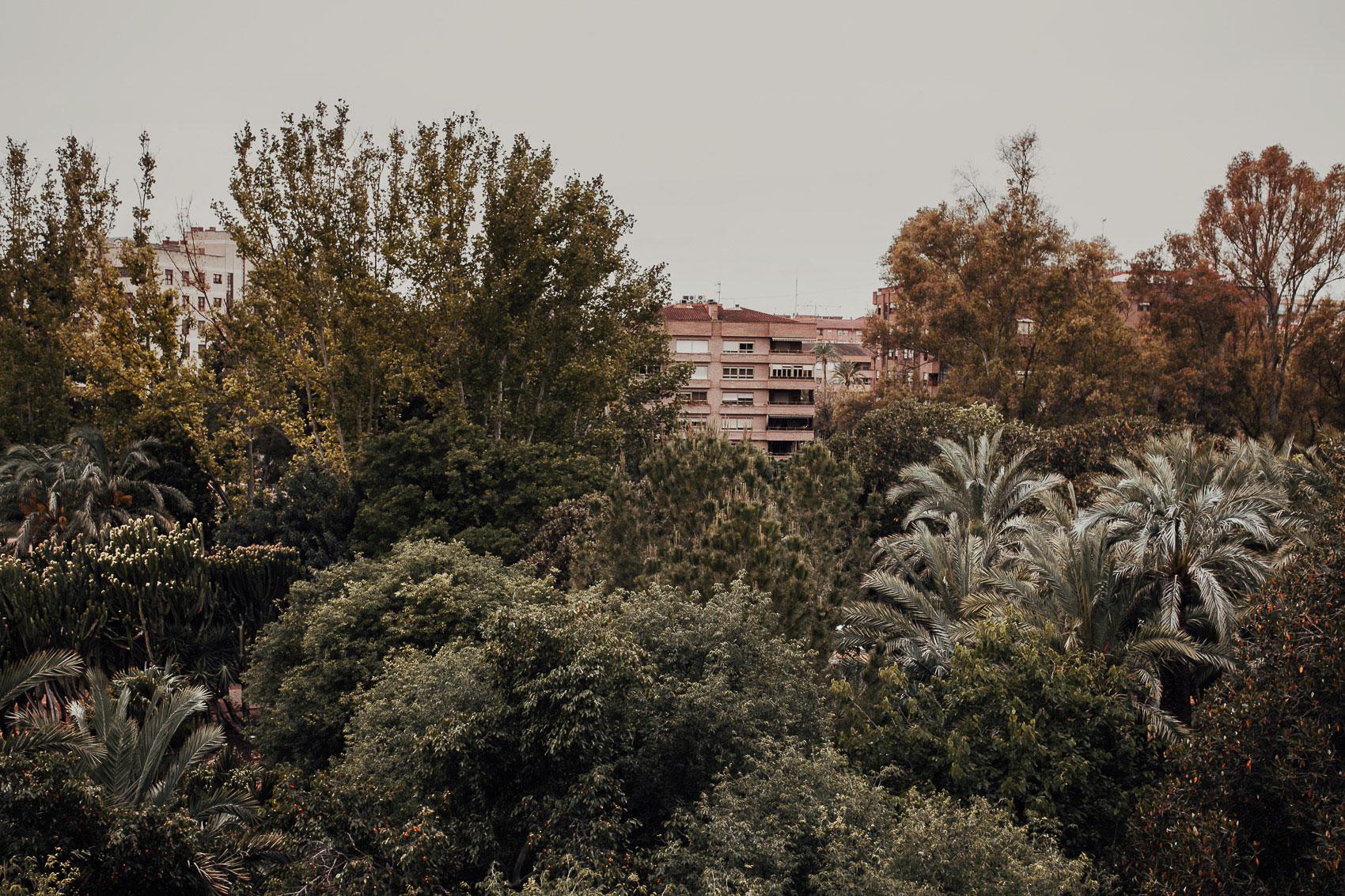 vistas naturaleza arboles verde