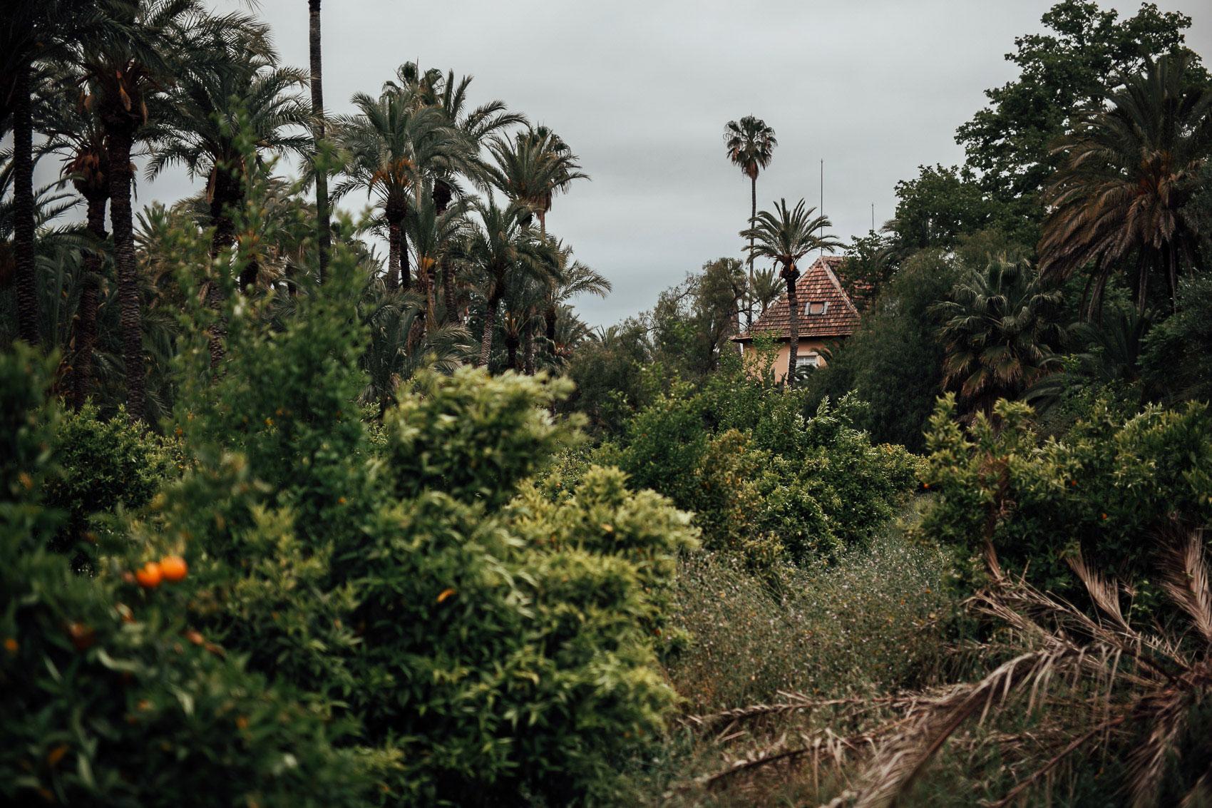 parque marquesa exterior naturaleza palmeras