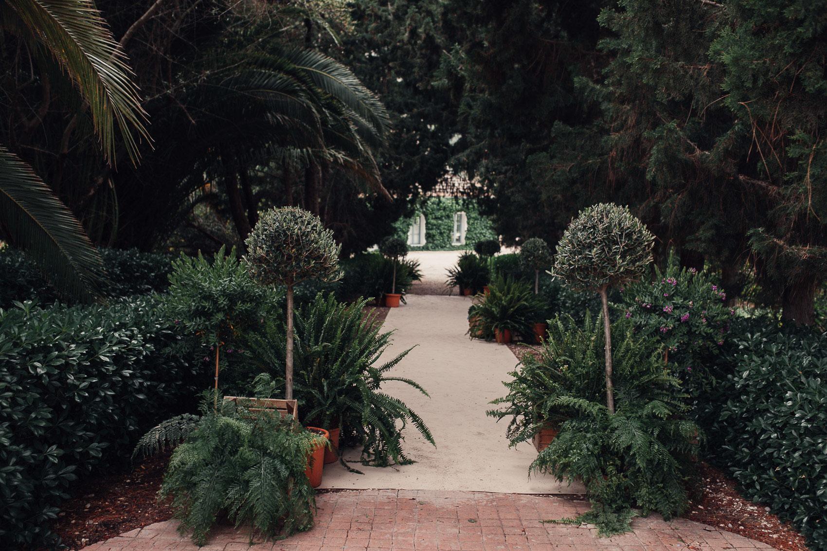 decoracion parque naturaleza plantas arboles verde